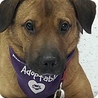Adopt A Pet :: Barney - Albemarle, NC
