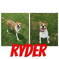 Adopt A Pet :: Ryder - Mt Vernon, IN