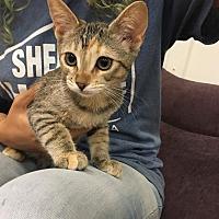 Adopt A Pet :: Aspen - Valencia, CA