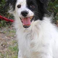 Adopt A Pet :: Chappel - San Diego, CA