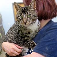 Adopt A Pet :: Pete - Indiana, PA
