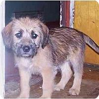 Adopt A Pet :: Sadie - Roseville, MI