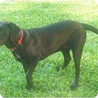 Adopt A Pet :: Luke - Altmonte Springs, FL