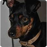 Adopt A Pet :: Tavi - Minneapolis, MN