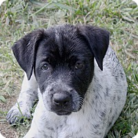 Adopt A Pet :: Annie - in Maine - kennebunkport, ME