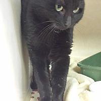 Adopt A Pet :: Scofield - Westminster, CA
