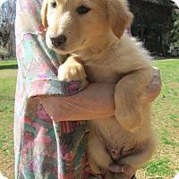 Adopt A Pet :: NOAH - Lincolndale, NY