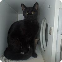 Adopt A Pet :: Elizabeth - Newport, NC