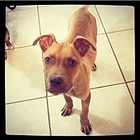Adopt A Pet :: Boomer - Grand Bay, AL