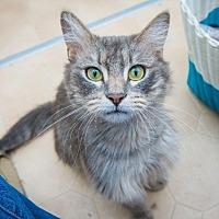 Adopt A Pet :: Excalibur - Corinne, UT