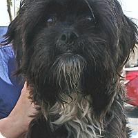 Adopt A Pet :: Dusty - Thousand Oaks, CA