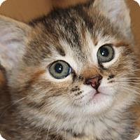 Adopt A Pet :: Matilda (in adoption process) - El Cajon, CA