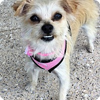 Adopt A Pet :: Gigi - Long Beach, CA
