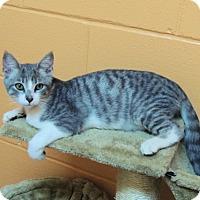 Adopt A Pet :: Carsyn - Athens, AL
