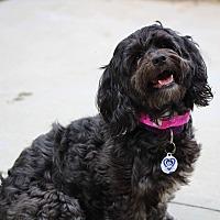 Adopt A Pet :: Gretchen Montgomery - Urbana, OH