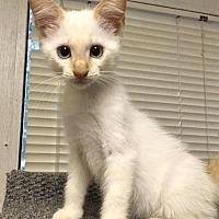 Adopt A Pet :: Freedom - Savannah, GA