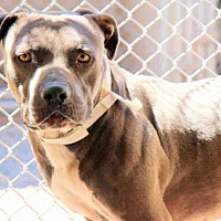 Adopt A Pet :: A3973444 - Phoenix, AZ
