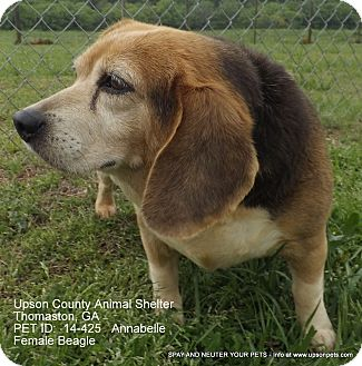 Beagle Mix Dog for adoption in Thomaston, Georgia - Annabelle