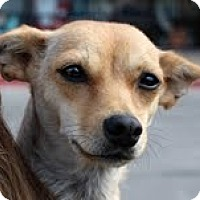 Adopt A Pet :: Mimi - justin, TX