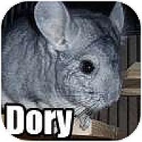 Adopt A Pet :: Dory - Virginia Beach, VA