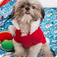 Adopt A Pet :: Regina - New York, NY