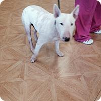 Adopt A Pet :: Bacon - Columbia, SC