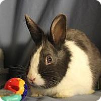 Adopt A Pet :: Einstein - Conshohocken, PA
