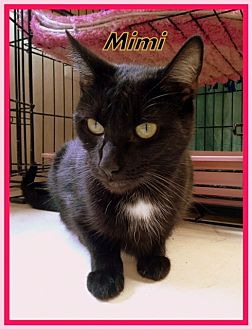 Domestic Shorthair Cat for adoption in Berkeley Springs, West Virginia - Mimi