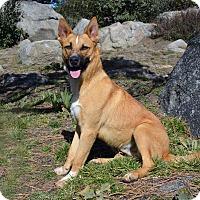 Adopt A Pet :: Hondo - Mountain Center, CA