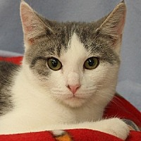 Adopt A Pet :: Newman - Savannah, MO