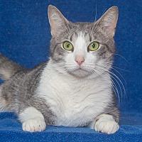 Adopt A Pet :: Capri - Elmwood Park, NJ