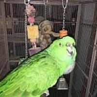 Adopt A Pet :: Jimmy - Neenah, WI