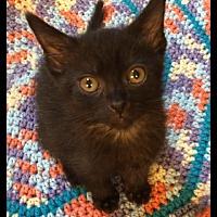 Adopt A Pet :: Eliza - Maywood, IL