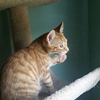 Adopt A Pet :: ASH - Clayton, NJ
