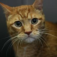 Adopt A Pet :: Califa - Canoga Park, CA