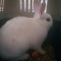 Adopt A Pet :: Elsa - Surrey, BC