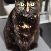 Adopt A Pet :: Panyk - Mission, KS