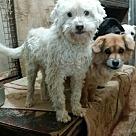 Adopt A Pet :: Doby