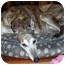 Photo 1 - Greyhound Dog for adoption in Dallas, Texas - Tyler