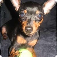 Adopt A Pet :: Tank - Rigaud, QC