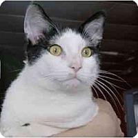 Adopt A Pet :: Oliver - Jenkintown, PA