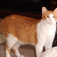 Adopt A Pet :: Elbe - Ventura, CA