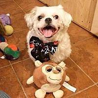 Adopt A Pet :: Jack - San Diego, CA