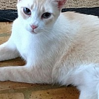 Domestic Mediumhair Cat for adoption in Mobile, Alabama - Penny