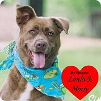 Adopt A Pet :: Sissy - San Leon, TX