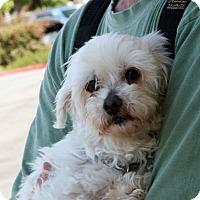 Adopt A Pet :: Ellen - Palmdale, CA