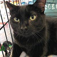 Adopt A Pet :: Florencia 08-4048 - Fremont, CA