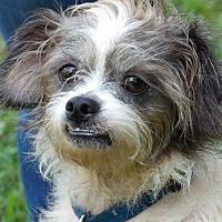 Adopt A Pet :: Opie (20 lb) Sweetheart - Williamsport, MD