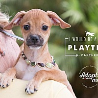 Adopt A Pet :: MAGNOLIA - Inland Empire, CA
