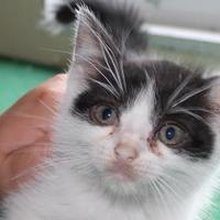 Adopt A Pet :: Johnny - Robinson, IL